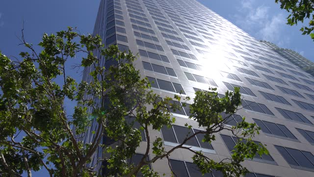 View of skyscrapers in downtown Los Angeles against blue sky. Camera looks upwards from the bottom. Green tree in the foreground.