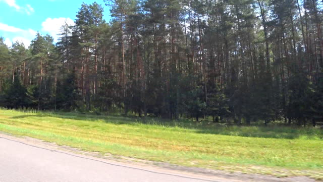 View of the forest from a moving car. Fast motion