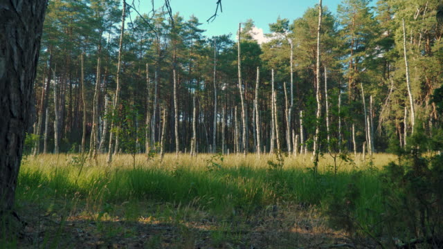 stockvideo's en b-roll-footage met weergave van vers groen gras en bomen in het bos - plantdeel
