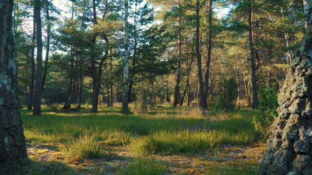 stockvideo's en b-roll-footage met uitzicht op het gras en bomen in het bos - plantdeel