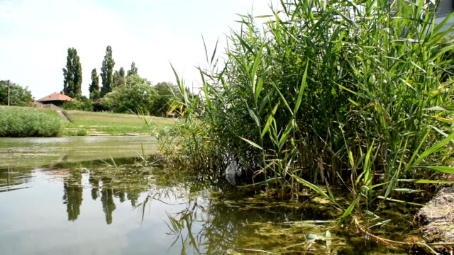 View of the water and water vegetation