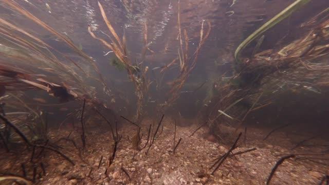 vista dell'acqua sulle alghe torrente fluttuanti in un'acqua di fiume trasparente - acqua dolce video stock e b–roll