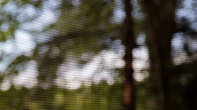View of trees through bugscreen. video