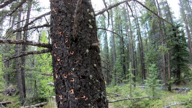 ağaçlık deliklerin görünümü - 10 saniyeden daha kısa stok videoları ve detay görüntü çekimi