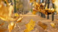 istock View on empty city park in autumn sunny day. Close up color foliage slowly falling to ground. Alley of park covered yellow leaves. Beautiful autumnal landscape. Slow motion 1145204419