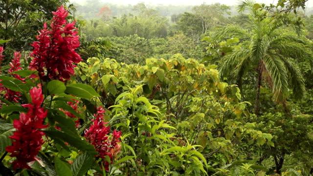 View over lowland tropical rainforest, Ecuador video