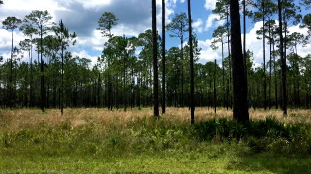blick durch autofenster während der fahrt in pinienwald mit schnittigen gras untergeschichte - kiefernwäldchen stock-videos und b-roll-filmmaterial