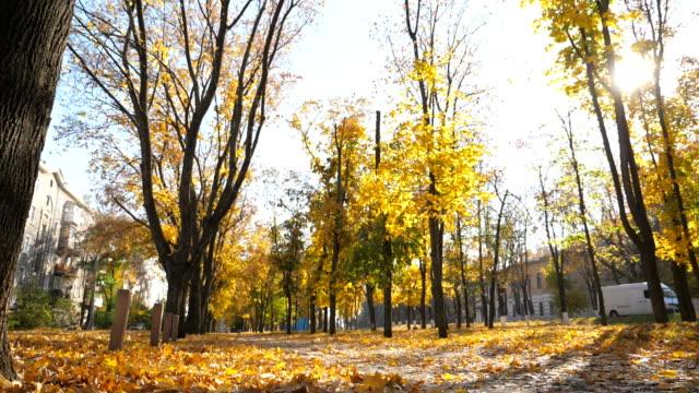 blick auf leere stadtpark im sonnigen herbsttag. lange gasse des parks ist mit hellen laub bedeckt. schöne landschaft mit sonne im hintergrund. slow-motion - ahorn stock-videos und b-roll-filmmaterial