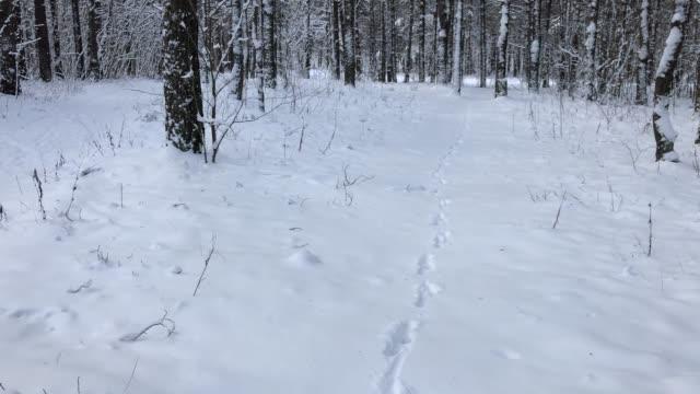 kar kış ormanı görünümü. yerde tavşan ayak izleri - tavşan hayvan stok videoları ve detay görüntü çekimi
