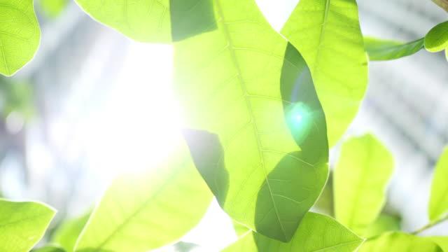 blick unter grüne blätter mit hellem himmel auf dem hintergrund. - blatt pflanzenbestandteile stock-videos und b-roll-filmmaterial