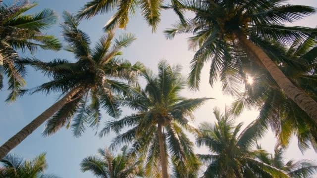 vidéos et rushes de vue vers le haut ou bas vue cocotier arbres forêt sous le soleil - vue en contre plongée verticale