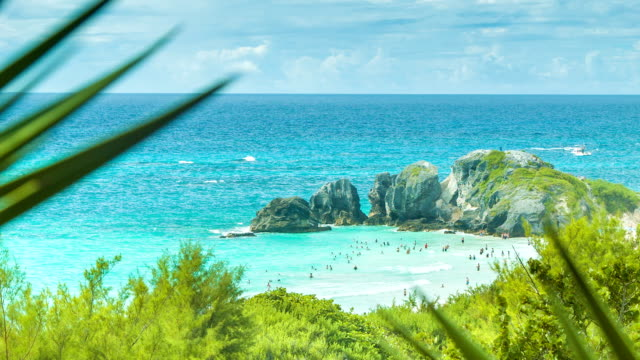 Viewing Bermuda's Horseshoe Bay Through Native Flora video