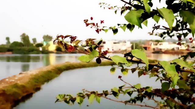 byn nära pond - haryana bildbanksvideor och videomaterial från bakom kulisserna
