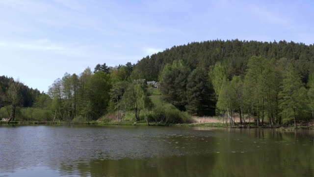 Village pond with tree alley on shore. Lake surface in wind video