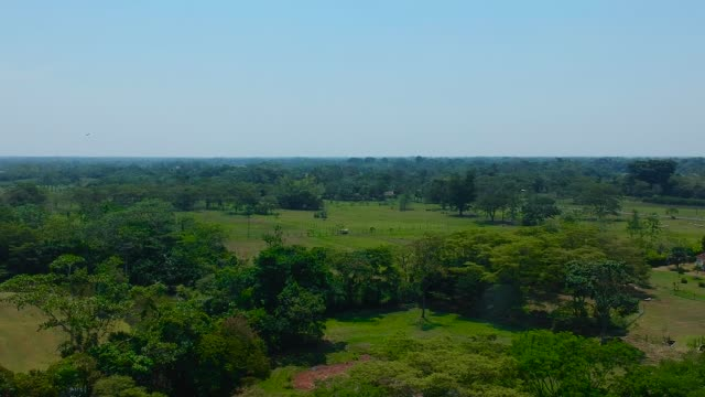 savana di villavicencio - guerrero video stock e b–roll