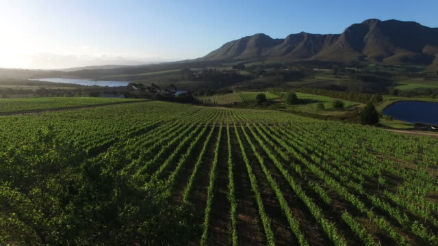 vineyard aerial view, south africa aerial perspective over a vineyard in south africa cape town stock videos & royalty-free footage