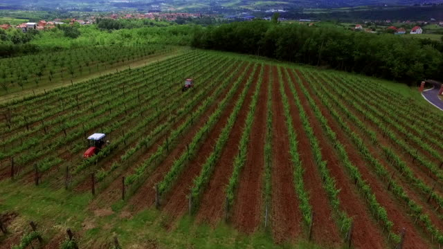 Vineyard aerial view video