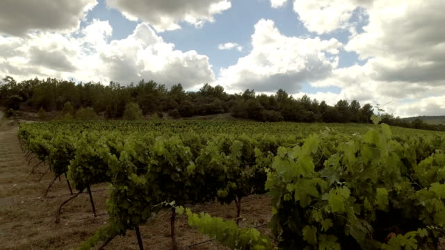 vineyard at a sunny day video