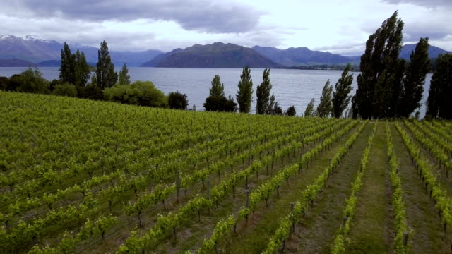Weinberg am Lake Wanaka, Neuseeland - Luftbild Drohne – Video