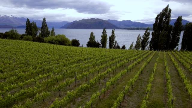 Viñedos en el lago Wanaka, Nueva Zelanda - vista aérea por drone - vídeo