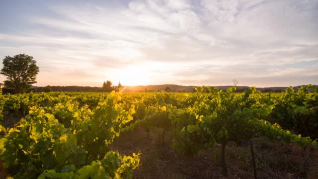 Vineyard at sunset Vineyard at sunset. France. provence alpes cote d'azur stock videos & royalty-free footage