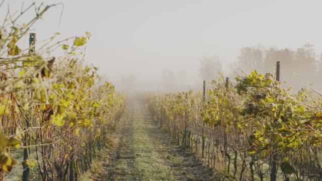 vidéos et rushes de un vignoble couvert de gel un jour ensoleillé d'automne en suède - froid