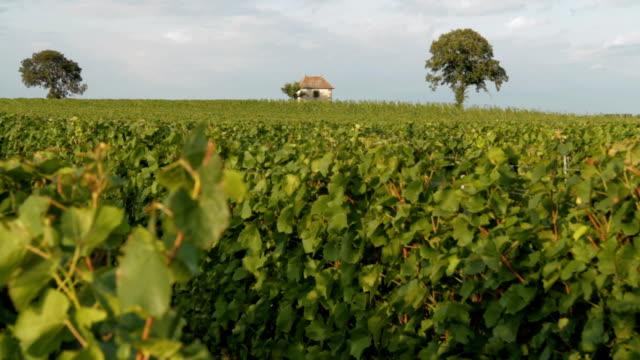 Vineyard - DOLLY video