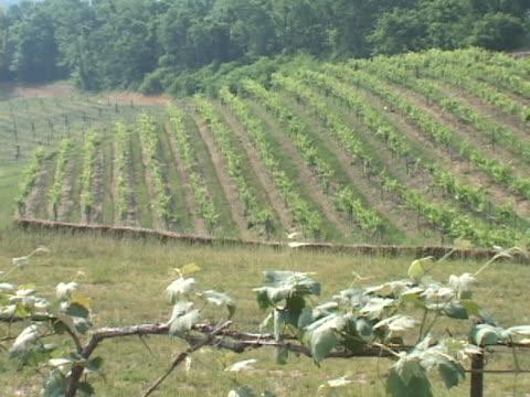 vineyard field - klip uzunluğu stok videoları ve detay görüntü çekimi