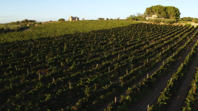 葡萄園在義大利 - sicily 個影片檔及 b 捲影像