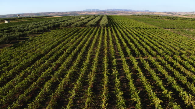 Vineyard in Italy A drone view of Vineyard in Sicily, Italy. hovering stock videos & royalty-free footage