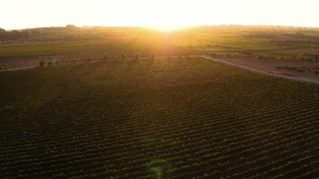 イタリアのブドウ園 - ビーガン点の映像素材/bロール