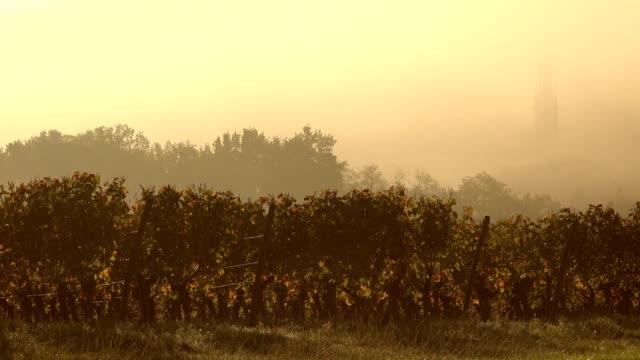 Vineyard in mist, Bordeaux Wineyard in autumn video