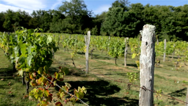 Vineyard in wine country of France video