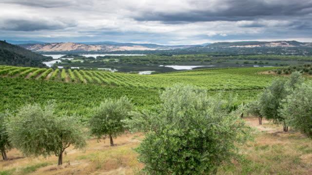 Vineyard, Lake County, California video