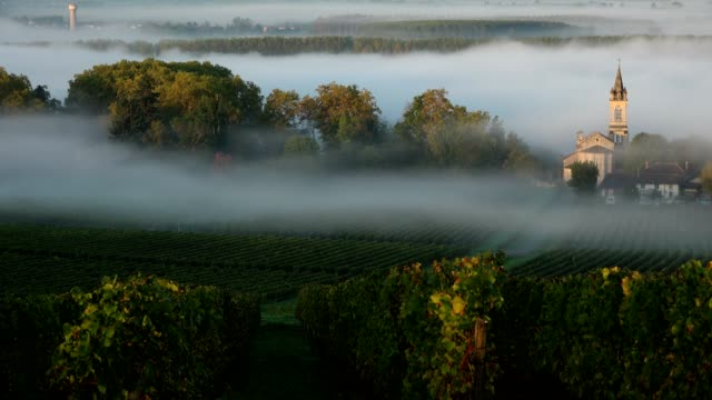 Vineyard landscape on smog-Vineyard south west of France, Sauternes, Timelpase