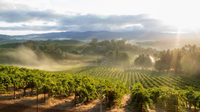 vineyard morning mist - azienda vinicola video stock e b–roll