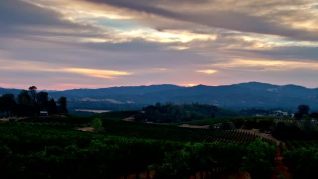 Vineyard Morning video