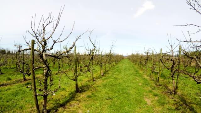 Vineyard on a sunny day 4k video