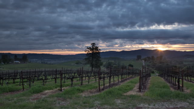 Vineyard Sunrise video