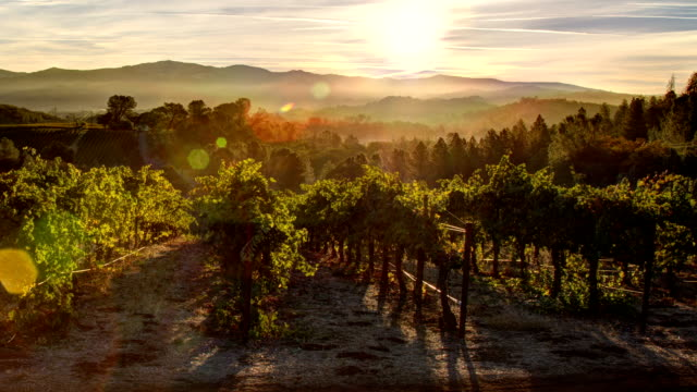 Vineyard Sunrise