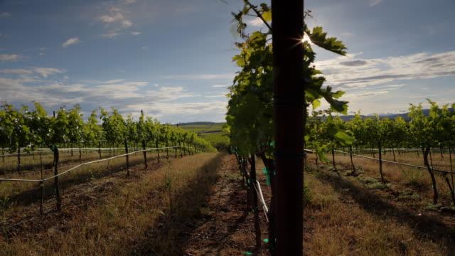 Vineyard Sunshine video