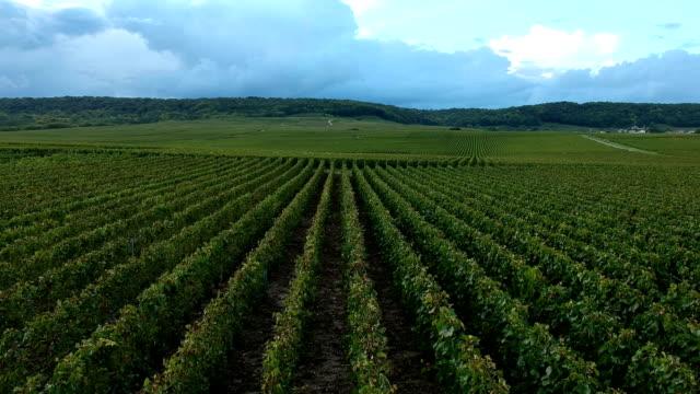 vídeos de stock, filmes e b-roll de vinhedo, região de champagne, trépail - culturas