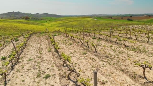vingård - anatolien bildbanksvideor och videomaterial från bakom kulisserna