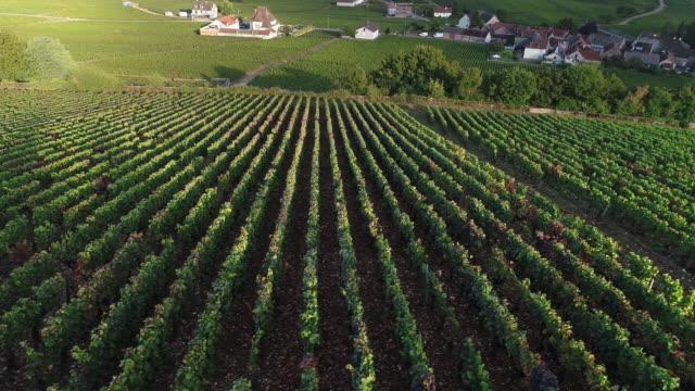 vineyard with sun beams and a village in france - francja filmów i materiałów b-roll