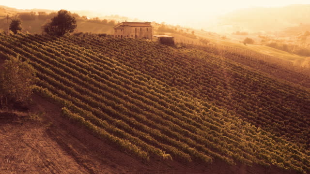 Vineyards and landscape in Tuscany, Italy - video