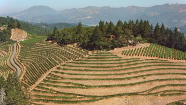 aerial vingårdar i napa valley, ca - vineyard bildbanksvideor och videomaterial från bakom kulisserna