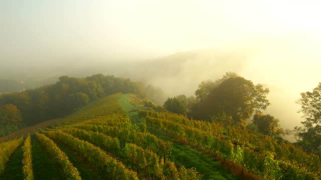 AERIAL Vineyards In The Morning video