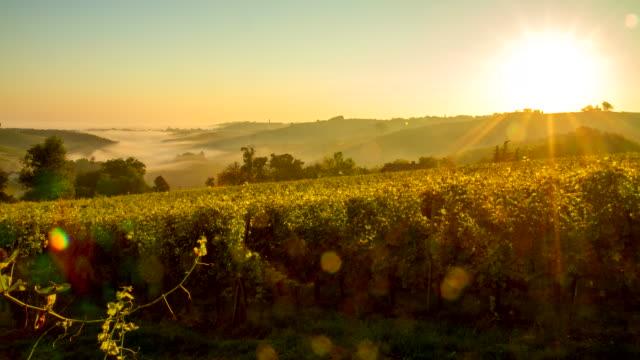 T/L Vineyards In The Sunrise video