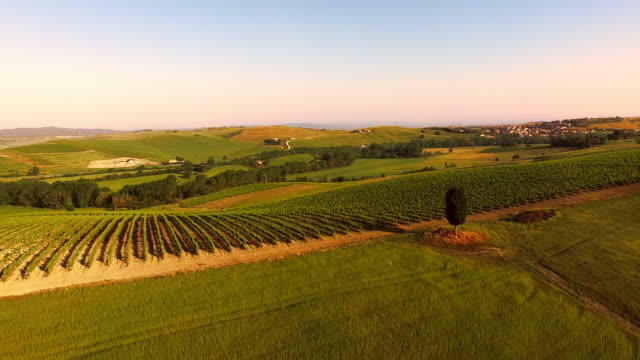 AERIAL Vineyards in Tuscany video