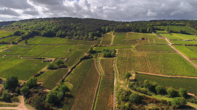 Vineyards of Burgundy area in France from a drone flying back video